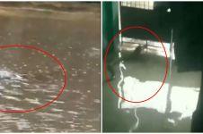 8 Momen hewan liar muncul dalam banjir Jakarta ini bikin syok