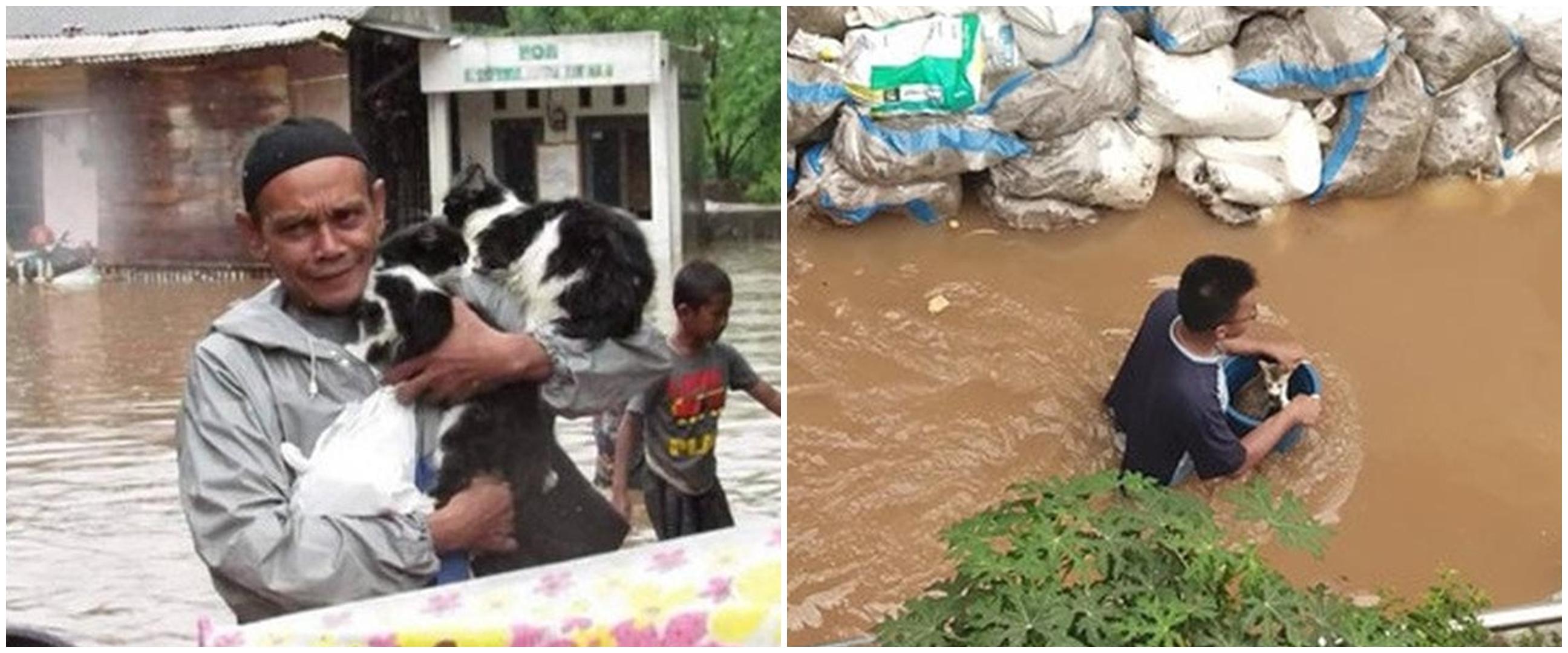 8 Potret evakuasi kucing & anjing saat banjir ini bikin haru