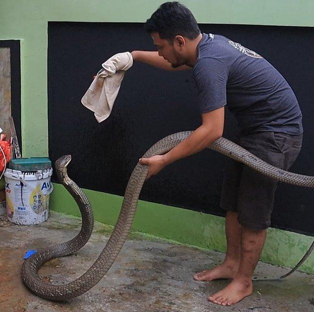 8 Momen Panji Petualang bersama King Cobra 'Garaga', bak saudara © 2020 instagram.com