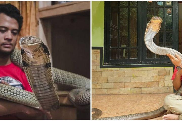 8 Aksi ekstrem Panji Petualang bersama king cobra 'Garaga', ngeri