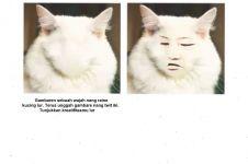 10 Editan lucu wajah kucing ini bikin orang nggak jadi gemas