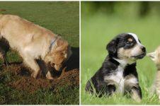 Detik-detik anjing gali tanah untuk kuburkan anak kucing, haru