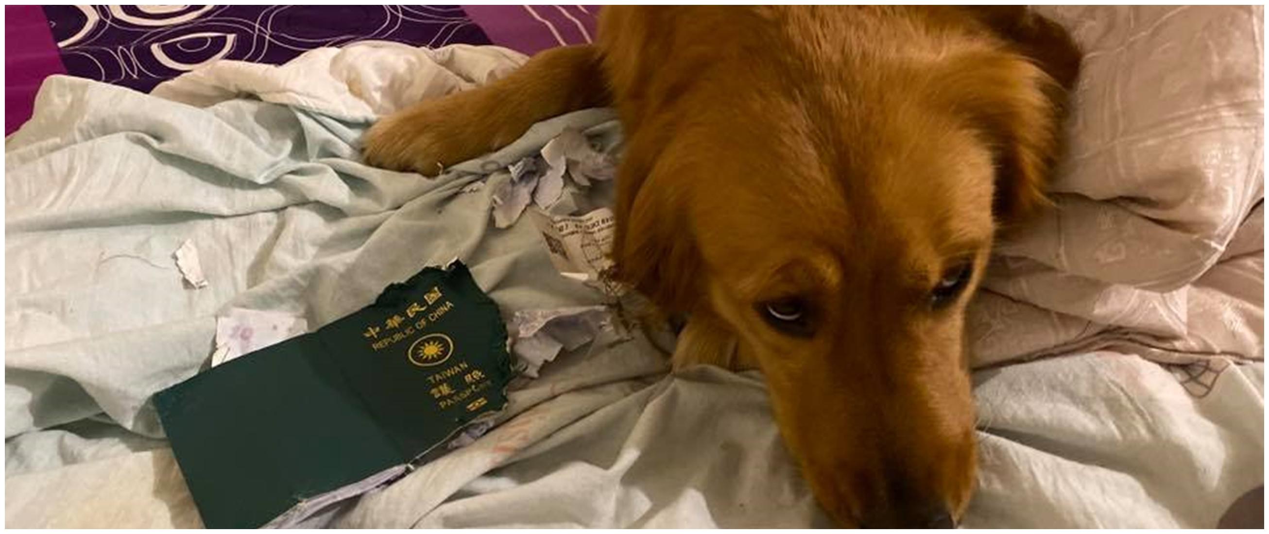 Kisah anjing selamatkan majikannya dari ancaman virus Corona