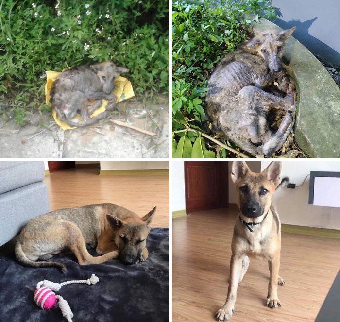 Potret anjing sebelum dan sesudah diadopsi istimewa