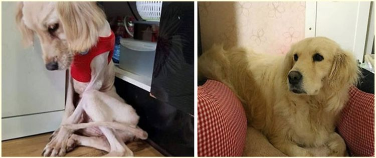 10 Potret anjing sebelum dan sesudah diadopsi, bikin haru