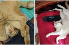 15 Potret pose tidur kucing ini bikin badan ikut encok