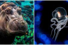 10 Potret hasil kontes fotografi laut ini bikin melongo