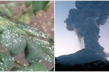 Gunung Merapi erupsi, hujan abu sampai ke Solo dan sekitarnya