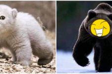 10 Editan hewan bermuka kucing ini kocaknya bikin cengar-cengir