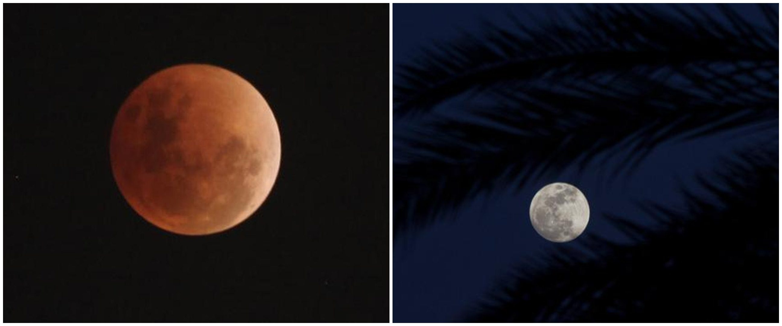 4 Fakta bulan purnama 'Worm Moon', fenomena langit hari ini