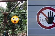 Aksi menghukum tupai karena curi buah ini dikecam warganet