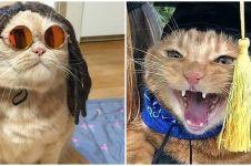 8 Kucing ini didandani nyeleneh bikin tampilannya jadi kocak