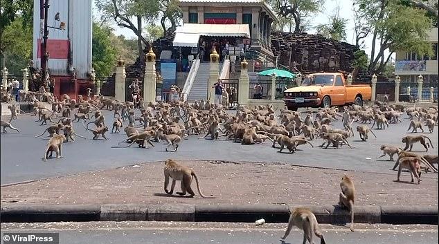 ratusan monyet di Tahiland  © 2020   dailymail.co.uk