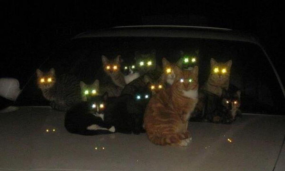 8 Potret serem gerombolan hewan di kegelapan, bikin merinding Berbagai sumber