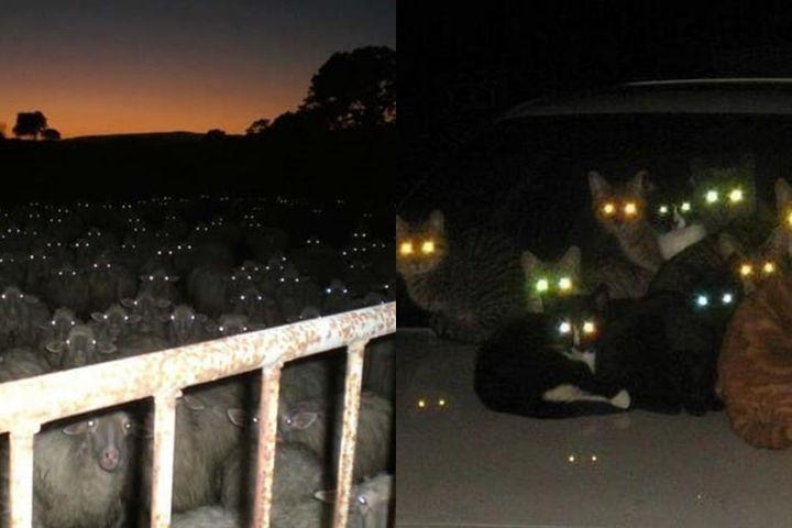 8 Potret serem gerombolan hewan di kegelapan, bikin merinding