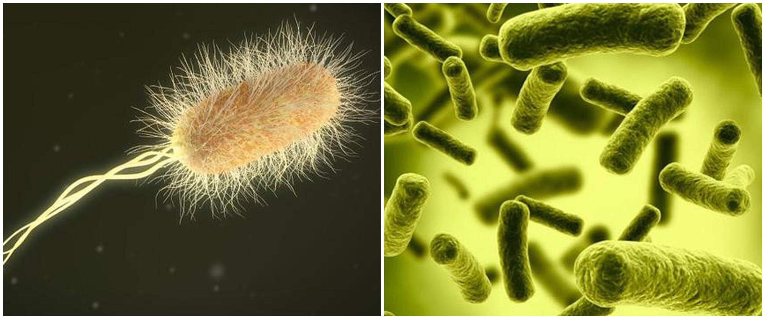 Waspada Corona, kenali 10 bakteri yang terdapat pada uang