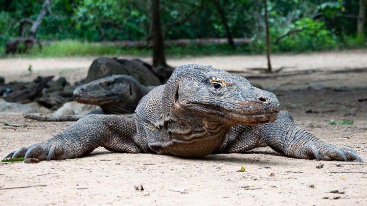 Cegah penyebaran Corona, Taman Nasional Komodo ditutup sementara