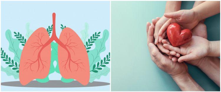 5 Cara menjaga paru-paru tetap sehat, sederhana dan efektif