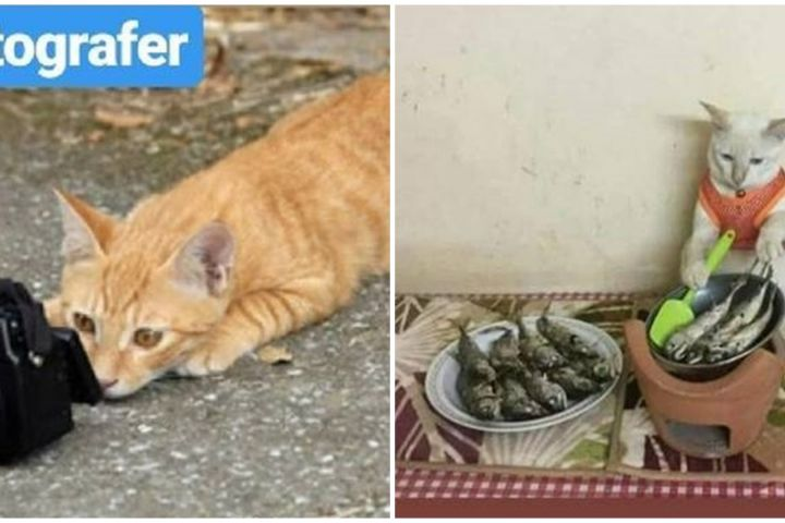 10 Tingkah lucu kucing jika bekerja seperti manusia, kocak