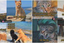 10 Meme obrolan kucing ini bikin susah nahan tawa