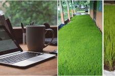 Efek WFH, petani ini bagikan cara pembibitan padi di rumah