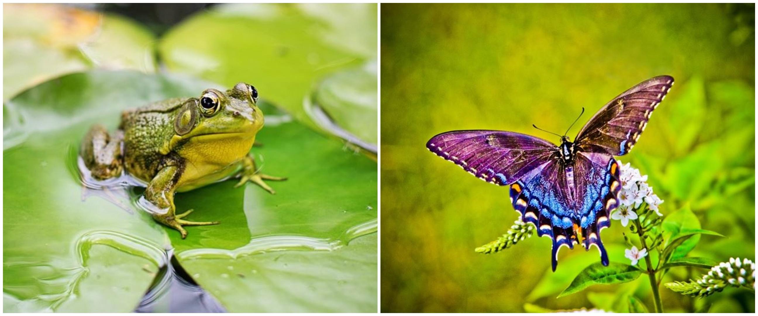 Pengertian metamorfosis sempurna, ciri-ciri dan contohnya