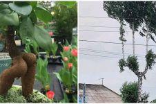 10 Penampakan nyeleneh tanaman ini bikin mikir kemana-mana