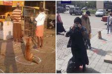 10 Potret perilaku unik binatang ikuti social distancing, kocak