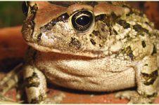 Metamorfosis katak, lengkap dengan penjelasan, proses dan gambar