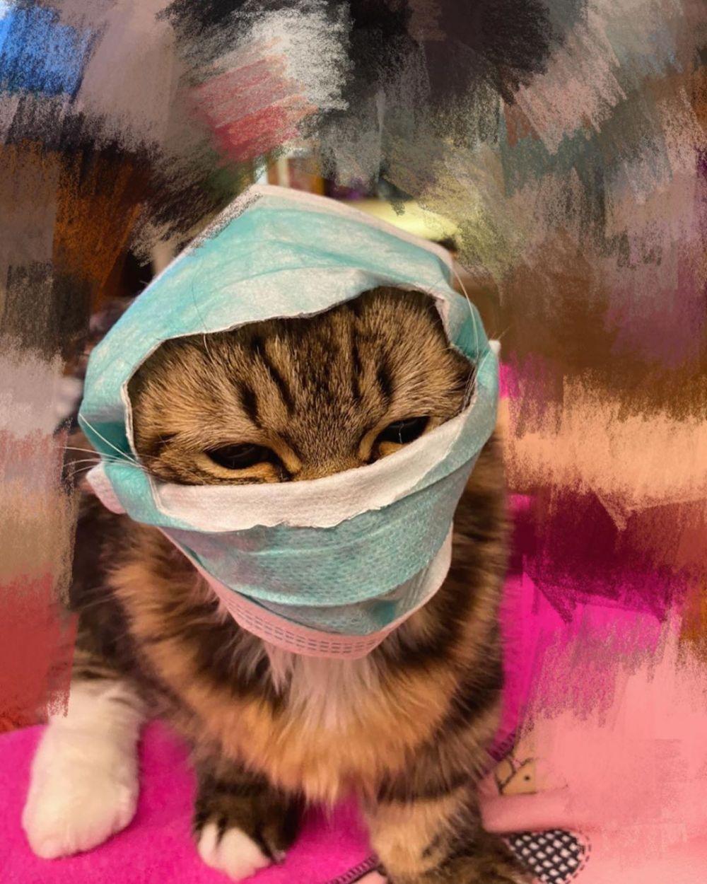 Gambar Kucing Pakai Masker godean.web.id