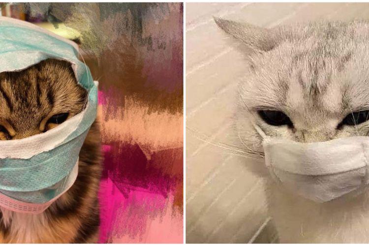 10 Penampakan Kucing Pakai Masker Ini Bikin Gemas Sekaligus Ngaka