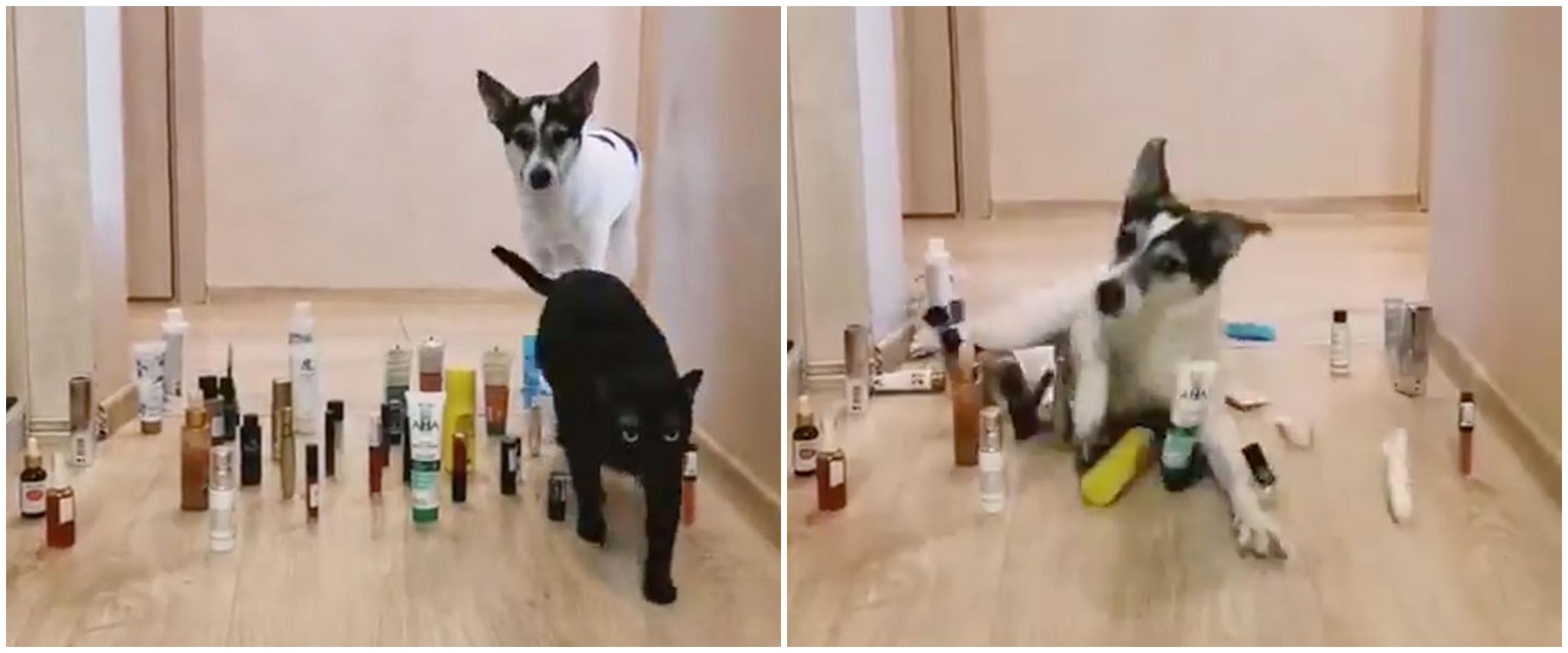 10 Potret kucing ternyata bisa jadi mata-mata ini kocak