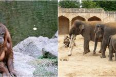 Ogah terpuruk akibat corona, kebun binatang ini tawarkan tur virtual