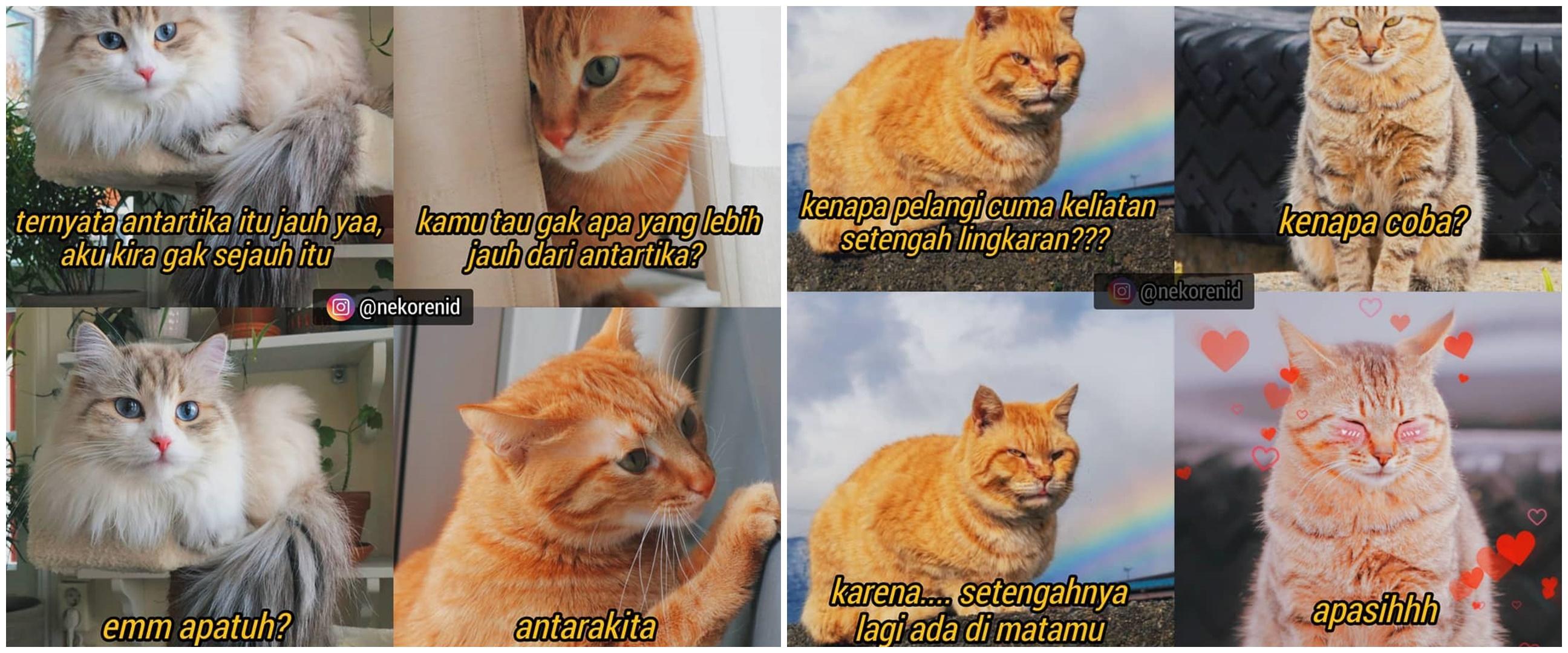 10 Meme gombalan kucing oren ini bikin gebetan tersipu malu