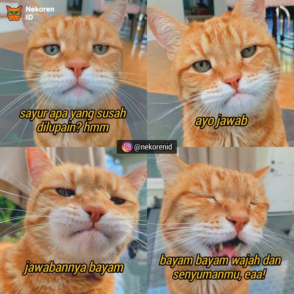 Meme gombalan kucing oren instagram