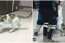 Momen haru induk kucing bawa anaknya berobat ke rumah sakit