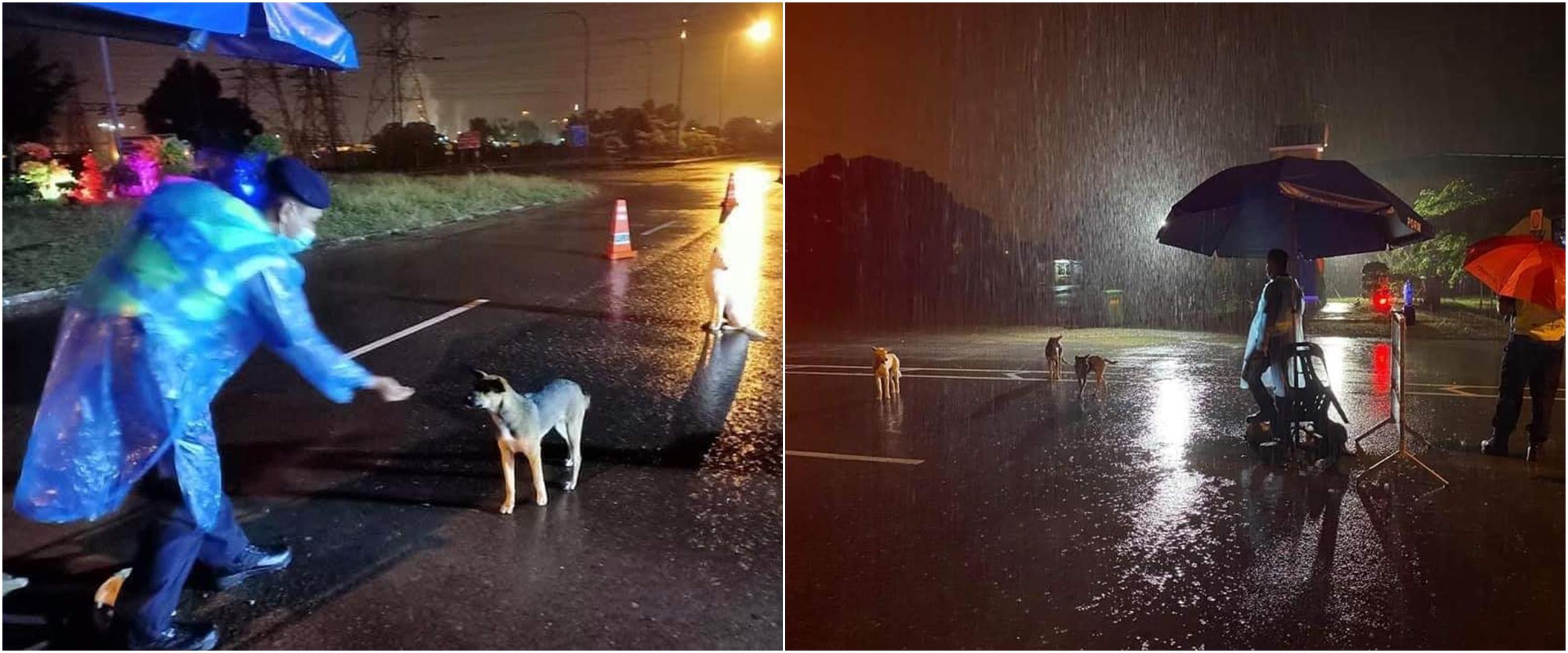 Potret polisi sahur di jalan sambil beri makan anjing liar, salut
