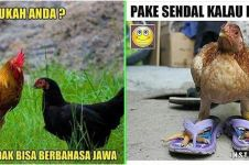 10 Meme lucu ayam ini bikin ketawa kesel