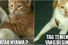 10 Meme lucu kucing lagi sial ini bikin pengen ketawa tapi kasian