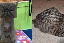 10 Potret gagal cukur bulu kucing ini bikin susah nahan tawa