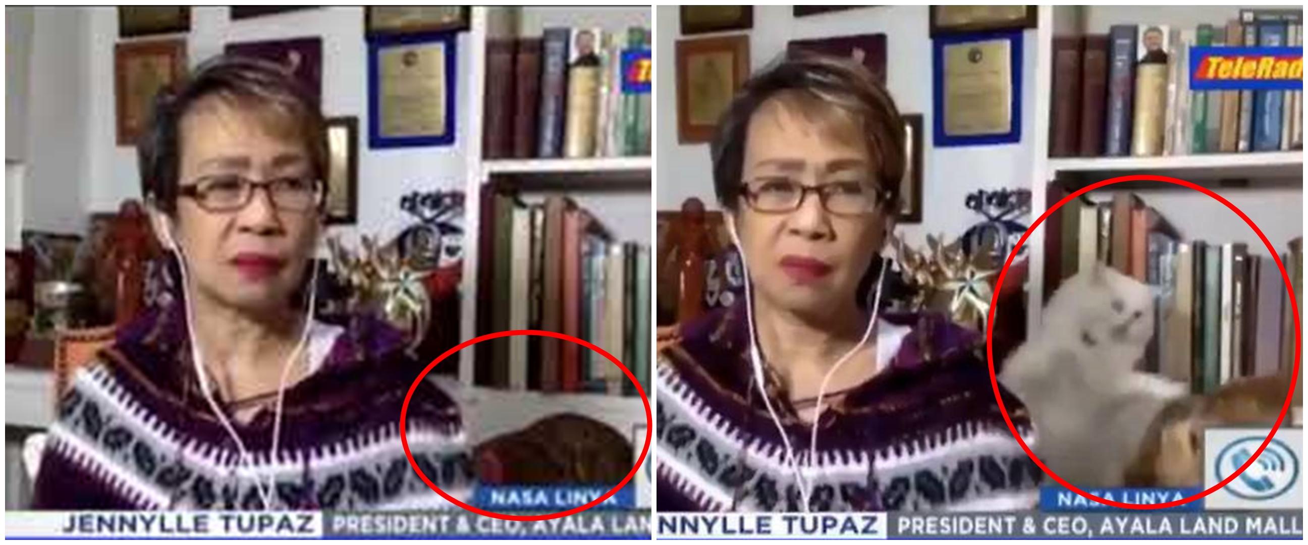 Viral video dua ekor kucing berkelahi saat jurnalis live TV