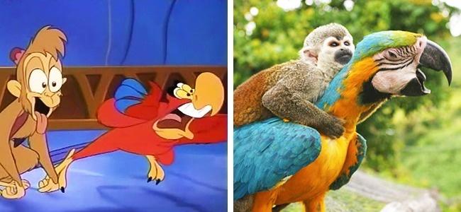 hewan mirip kartun brightside.me