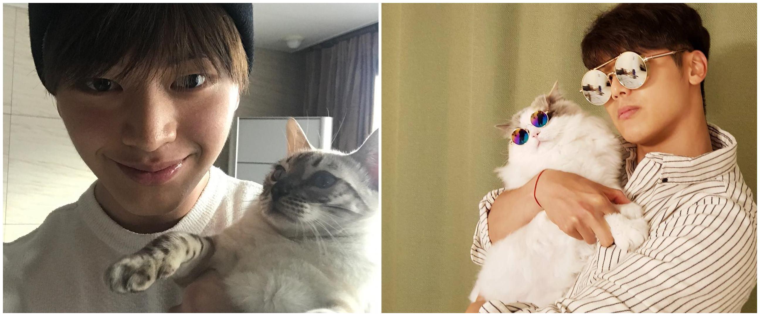 10 Seleb Korea ini pencinta kucing, sama sama bikin gemas