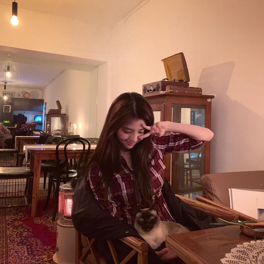 seleb korea pelihara kucing  Instagram