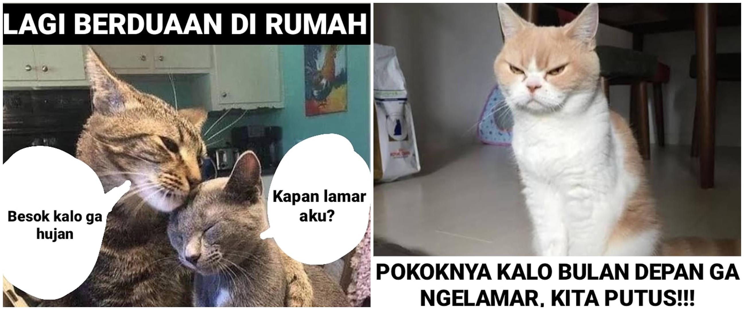 10 Meme kucing pengin dihalalin, lucu menggelitik