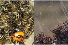 6 Penampakan serangga ini bikin kamu bergidik ngeri