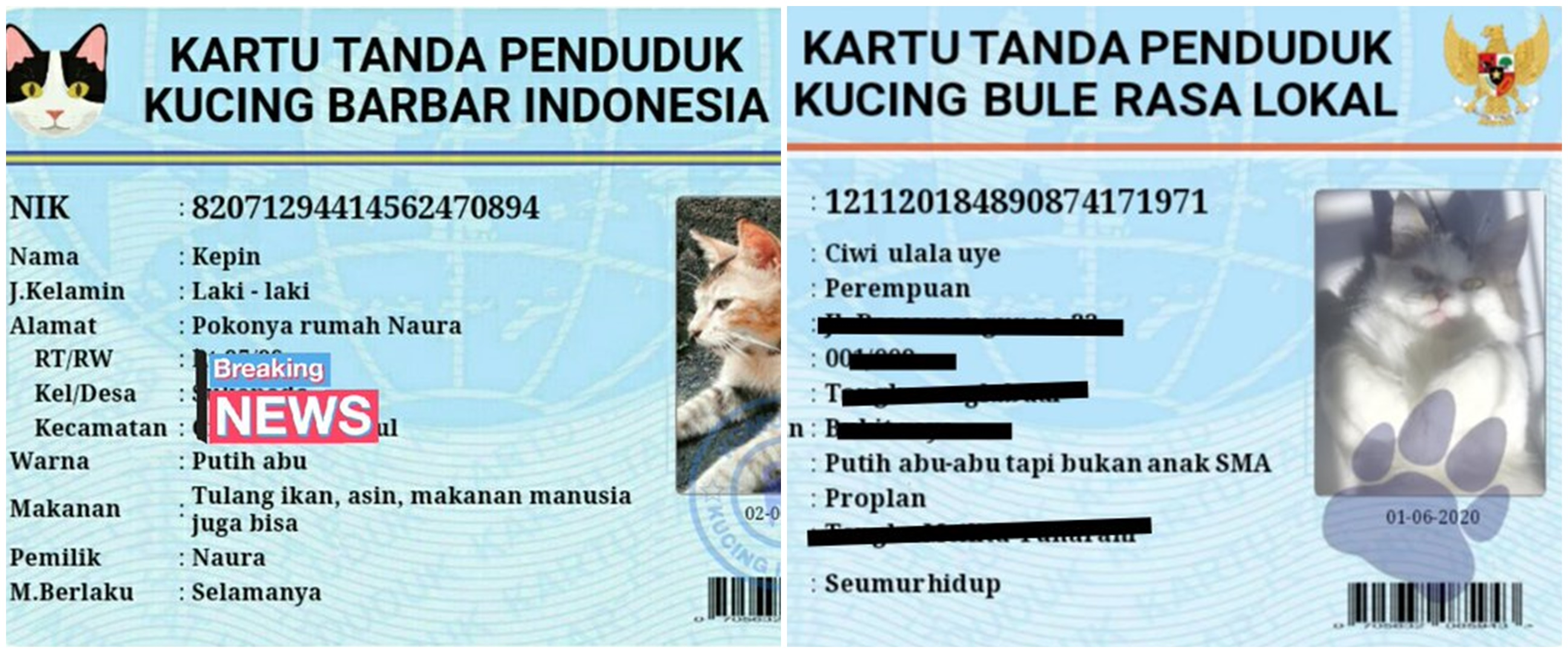12 Potret lucu KTP kucing warganet +62, namanya unik-unik