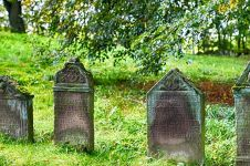 Viral penemuan 9 bangkai ayam dikubur berbentuk pocong di Kudus