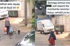Viral video wanita beri makan kucing jalanan tiap hari, bikin haru