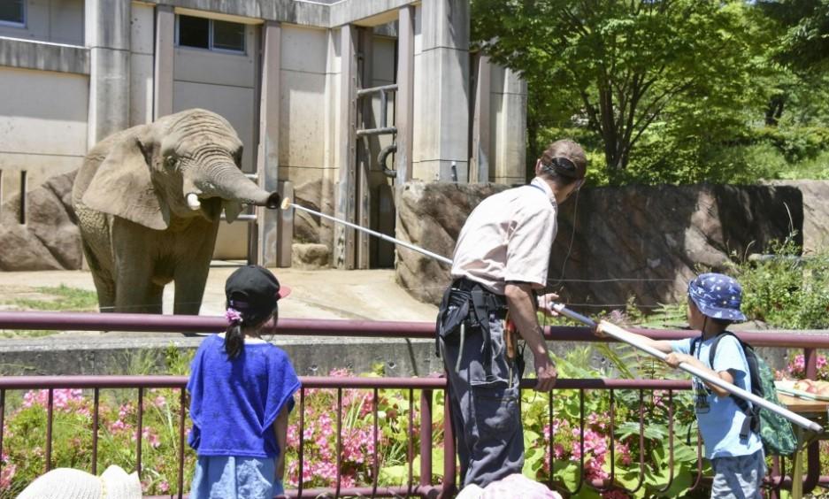 Kisah Mao, gajah patah hati usai ditinggal mati pasangannya